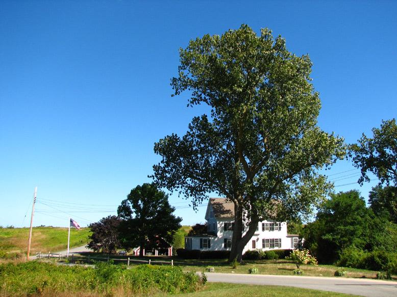 elm tree. elm tree house children.